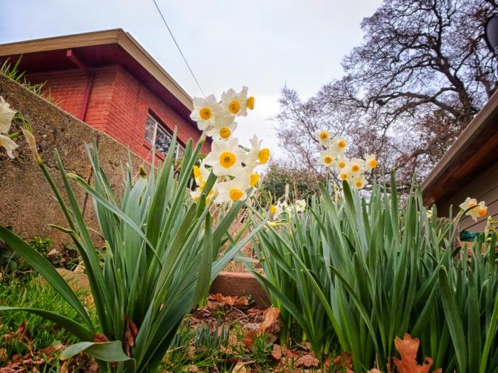 Next door neighbor flowers