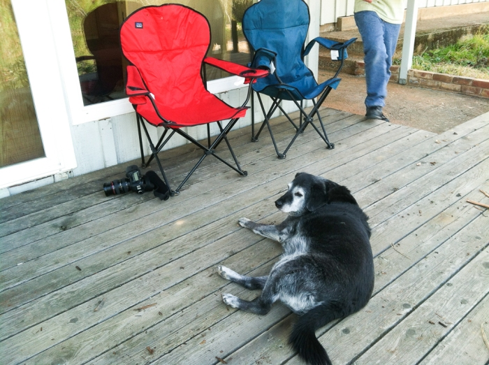 Obie T. Dogg in front of our temporary deck chairs