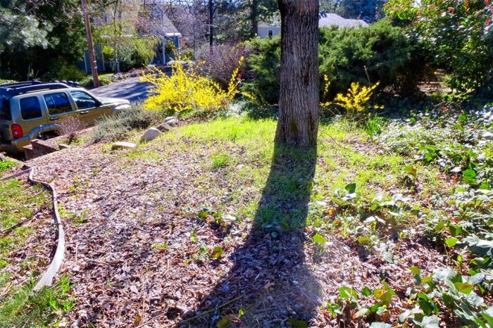 Front yard 3/14