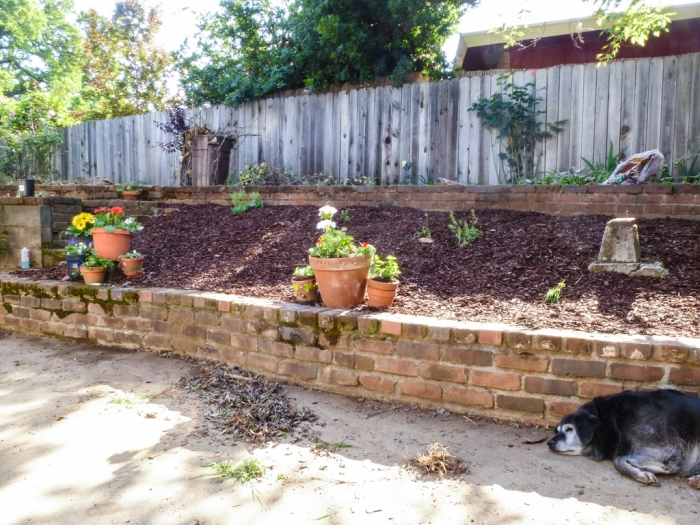 After mulch:  100 times better.